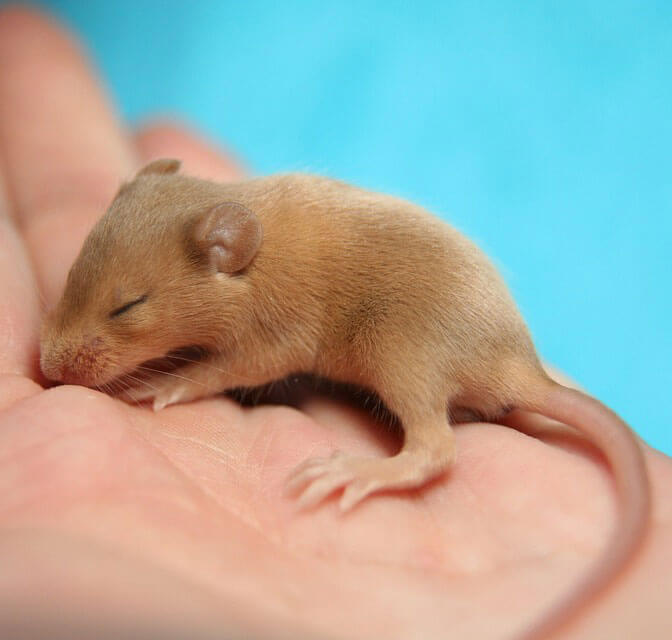 Afbeelding muis