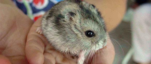 Afbeelding hamster