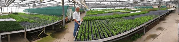 Afbeelding plantenkwekerij